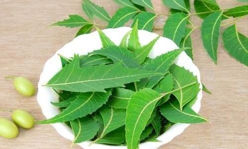 Cách trị mụn đơn giản tại nhà bằng lá cây neem(sầu đâu) - Ảnh 10